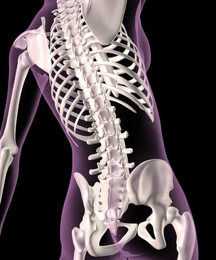 Bone Metabolism Assays