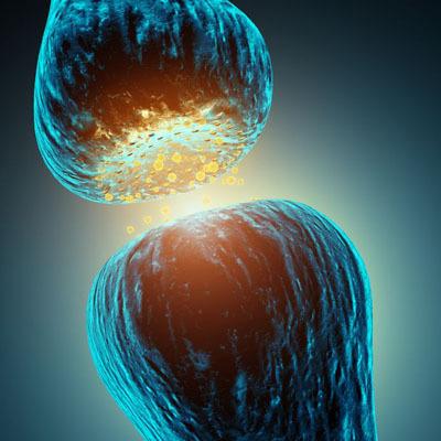 Anti-Myelin Auto-Antibodies ELISA Assay Kit